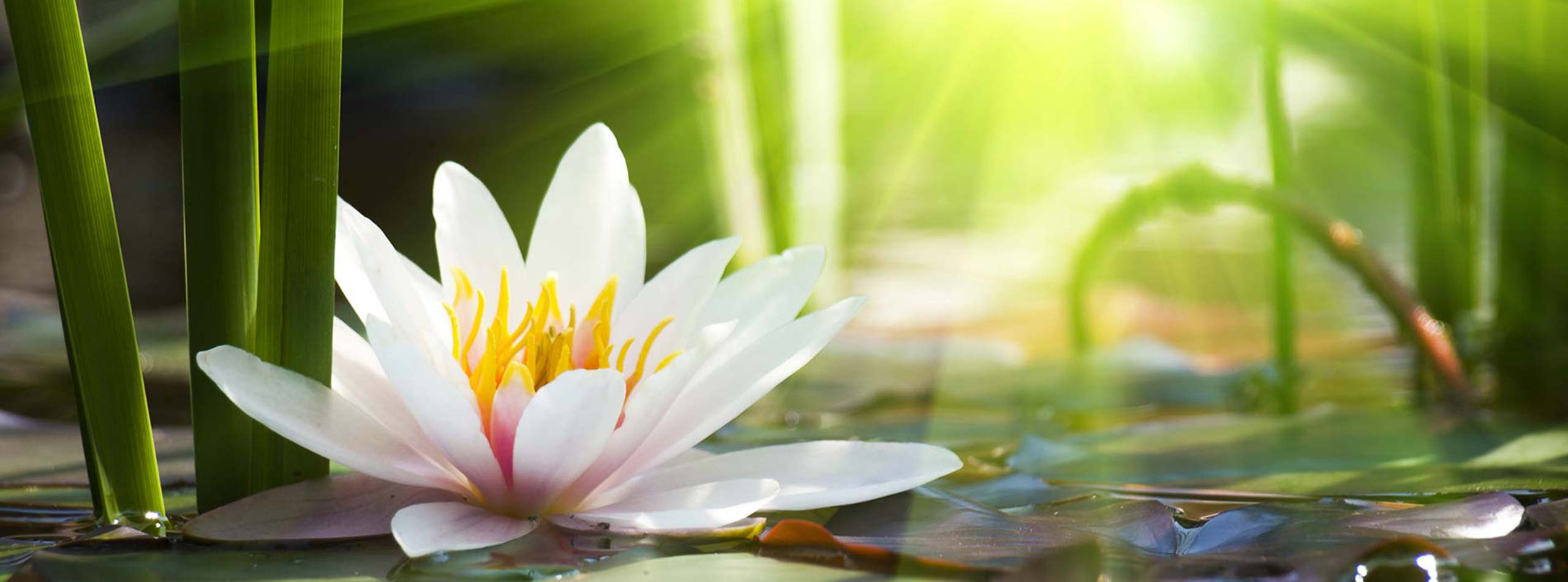 Mentaltraining - Healing Spirit im European Ayurveda Resort Mandira